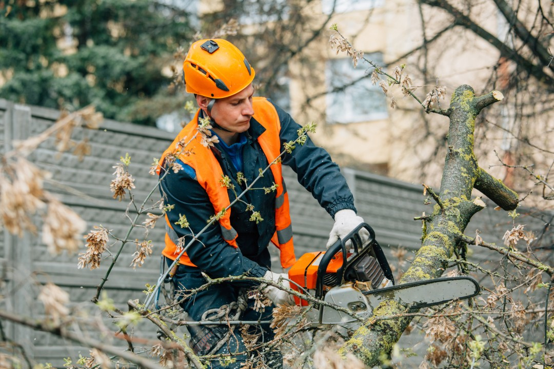 Arborist Sydney North Shore