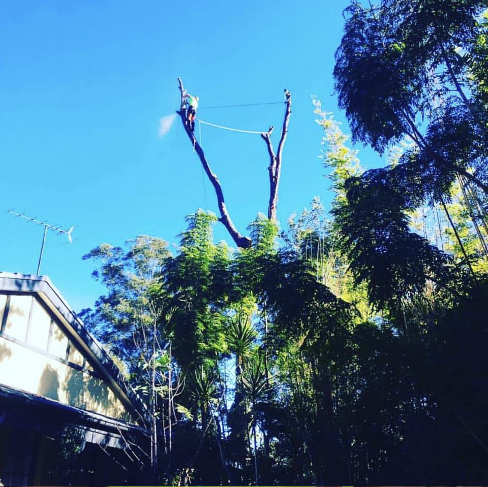 Branch Out Arborists Sydney